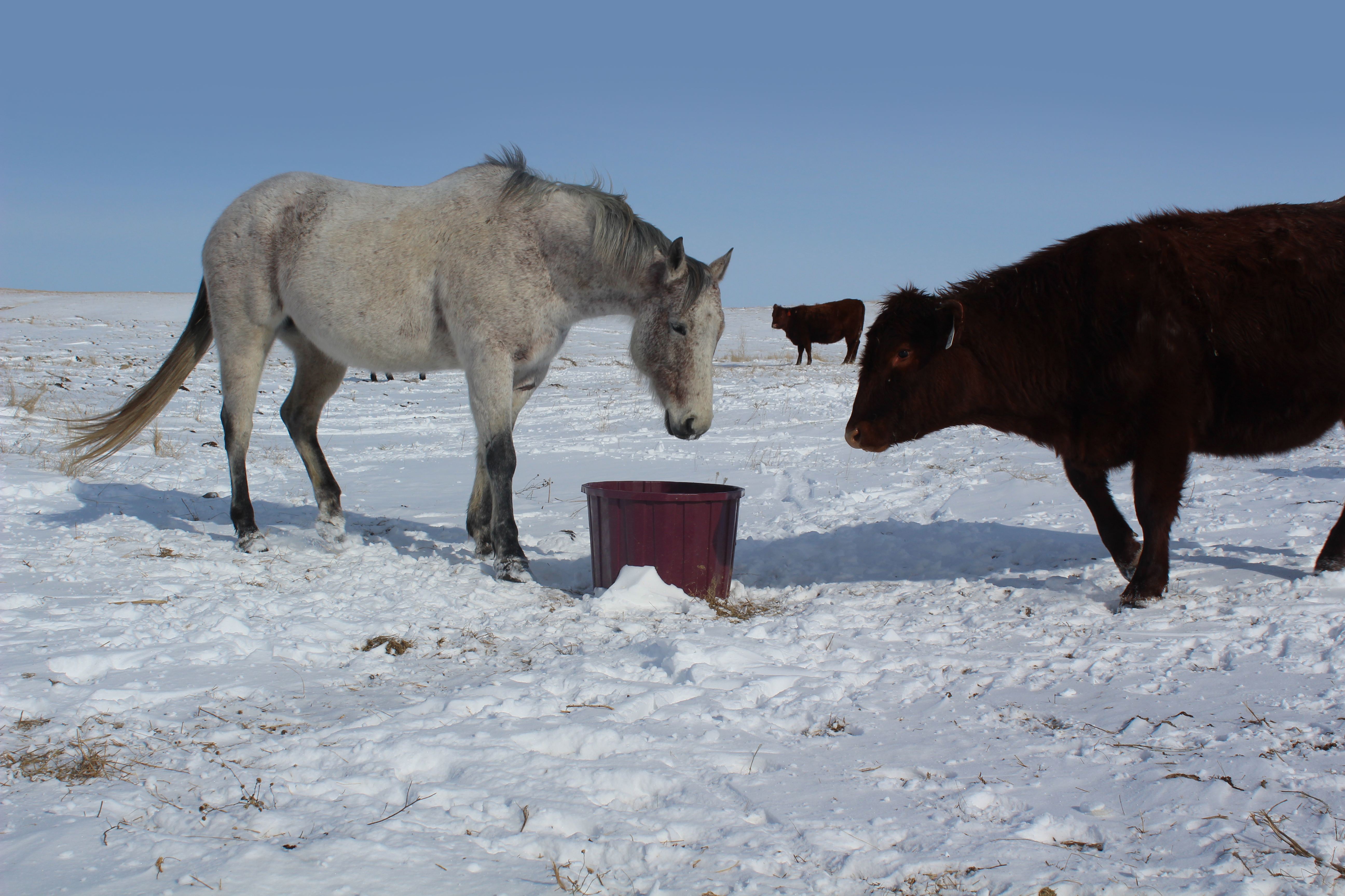 horse-and-cattle-mineral